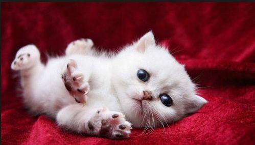 giải mã giấc mơ thấy mèo