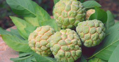 5 loại trái cây cần tránh ăn vào buổi tối kẻo dẫn đến hậu quả khó lường