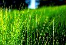 Mơ thấy cỏ có những ý nghĩa điềm báo như thế nào