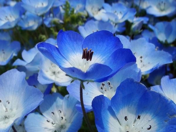 Bói tính cách qua màu xanh dương