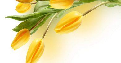 Bói tính cách qua màu vàng