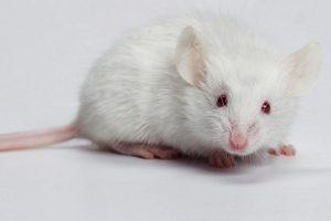 mơ chuột đánh con gì