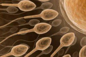 trứng rụng sống được bao lâu
